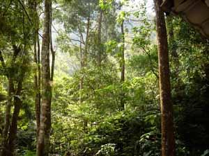 Kaliurang - Pesona Alam