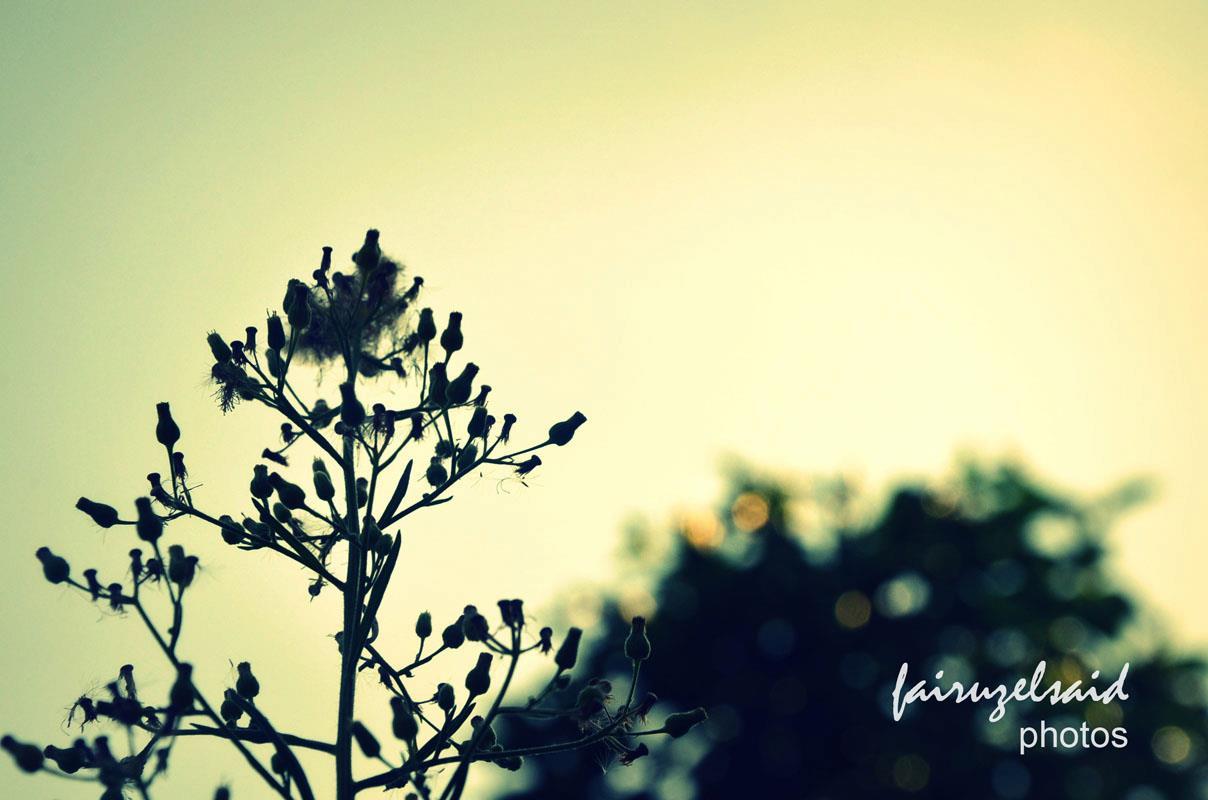 Fotografi Teknik Siluet Fairuz El Gambar Fotografer